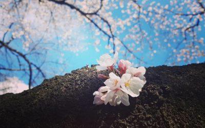 Le jardinier poète