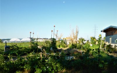 Notre jardin de Cocagne