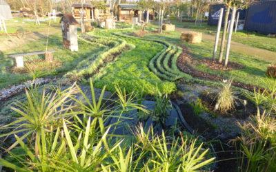 Une autre méthode complémentaire pour enrichir votre terre au jardin potager
