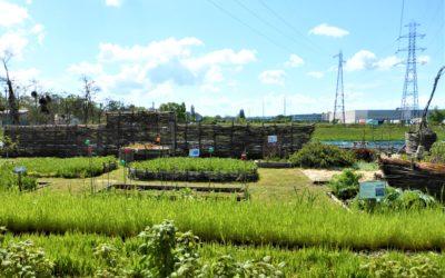Permaculture par- ci , permaculture par-là un terme en vogue puisque tout le monde en parle!